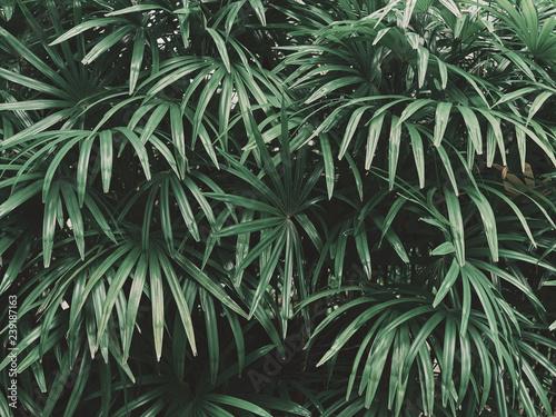 tlo-lisc-rosliny-tropikalnej