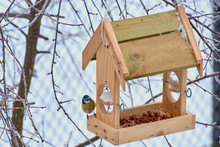 The Bird Feeds In The Winter