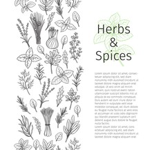 Herbs And Spice Seamless Border