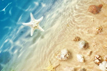 Panel Szklany PodświetlaneStarfish and seashell on the summer beach in sea water. Summer background. Summer time.