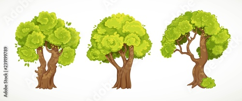 Photo Stands Kids Set of old thick trees with summer or spring green foliage vector drawing isolated on white background