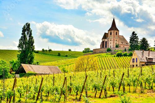 Vineyards in Alsace Wallpaper Mural