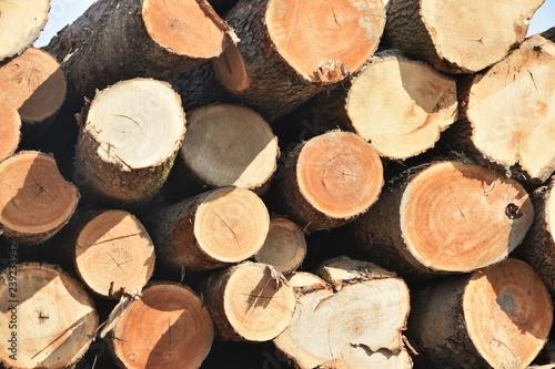 Fotografie, Obraz  Pile of Logs