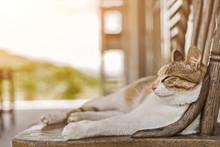 Young Cat Sleep