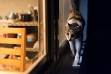 Cat Walk At Night