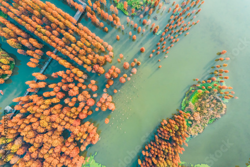 Fotomural Colorful autumn forest in wetland park,aerial view
