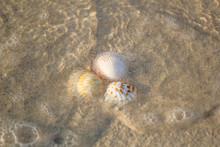 A Few Shells Lying On The Sea ...