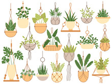 Plants In Hanging Pots. Decora...