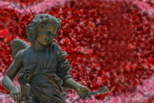 Close Cherub Cupid Portrait. Little Boy Angel Sculpture Holds The Rose In Left Hand With Blurry Bokeh Background From Beautiful Red And Pink Roses. Image For Valentine's Day Or Sweet Love Concept
