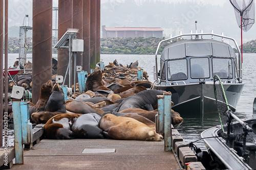 Deurstickers Nasa sealions block access to boats on dock
