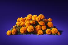 Flowers Of Cempasuchil On A Pu...