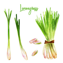 Fototapeta Przyprawy Lemongrass with slices, watercolour illustration