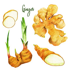 Fototapeta Przyprawy Ginger roots with sprouts and slices, watercolour illustration