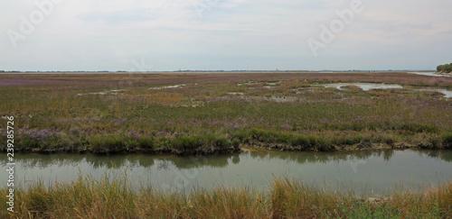 Obraz na plátně wild environment with marshes in the Venetian lagoon near Venice
