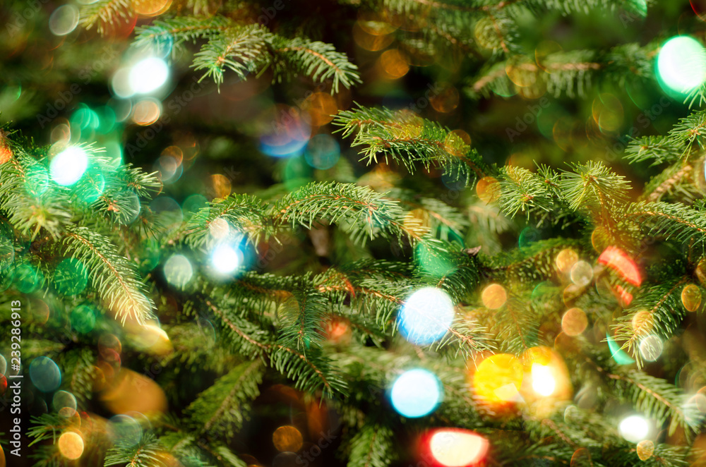 Christmas holiday background. Christmas fir tree and beautiful bokeh of sparkling lights.