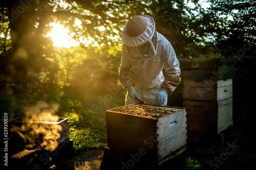 beekeeper working with beehive Wallpaper Mural