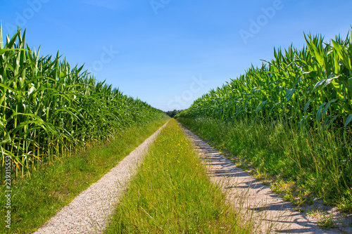 Photo Symmetrical countryside with sand road and corn fields
