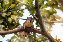 écureuil En Gros Plan