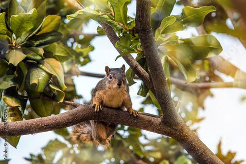 Fotobehang Eekhoorn écureuil en gros plan