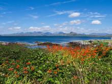 Irish Coastal Landscape With Orange Flowers (Montbretia) And Blue Sky And Mountains On The Horizon