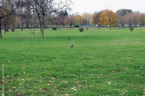 Fotografie, Obraz  Prato di erba con uccello atterrato alberi e case