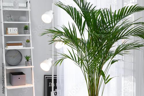 Photo Decorative Areca palm in interior of room