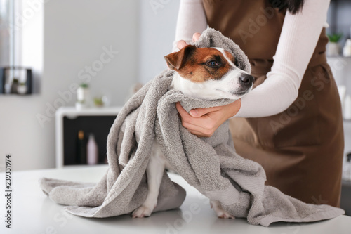Canvas Print Female groomer wiping dog after washing in salon
