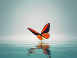 A red butterfly on sea.