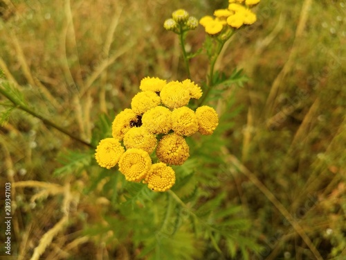 yellow flower with green leaves in field