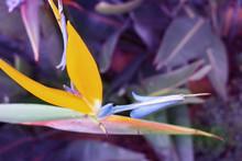 Vibrant Beautiful Botanic Gard...