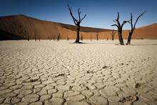 Footprints In Dried Mudflats I...