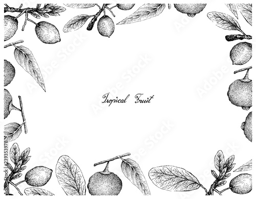 Tropical Fruit Illustration Frame Of Hand Drawn Sketch Ripe And