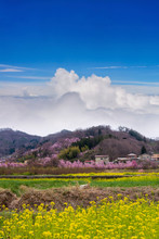 Cherry-blossom Trees (Sakura) And Many Kinds Of Flowers In Hanamiyama Park With Clear Blue Sky Background, Fukushima, Tohoku Area, Japan. The Park Is Very Famous Sakura View Spot