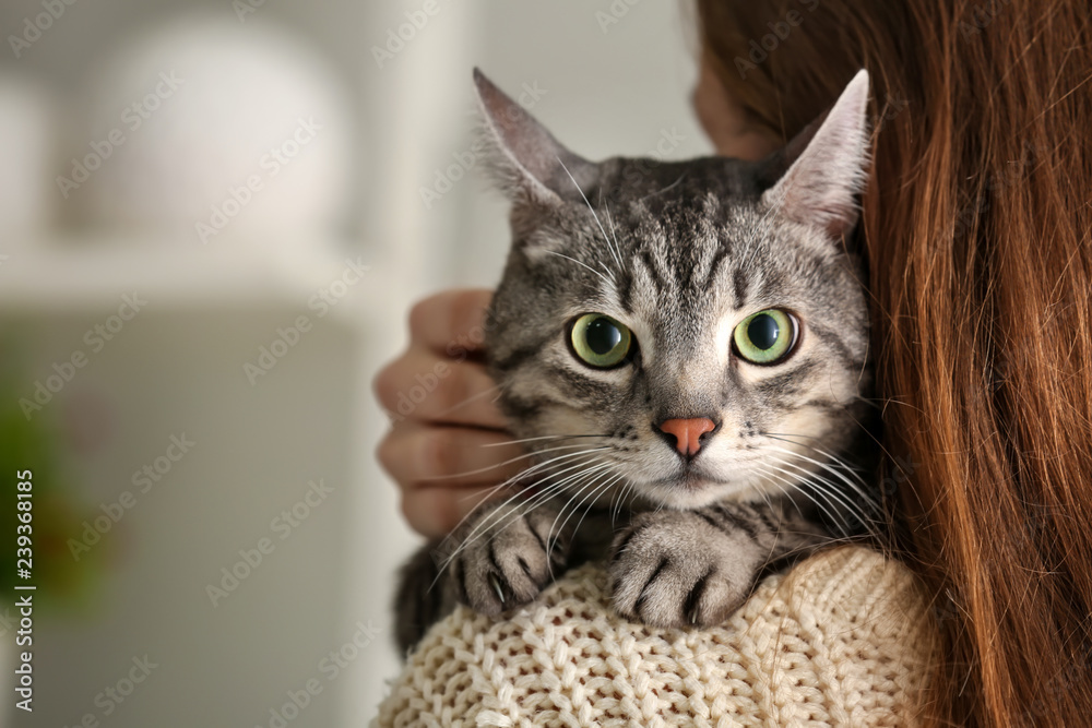 Fototapety, obrazy: Cute cat with owner at home