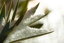 Winter. Schnee. Weihnachten.