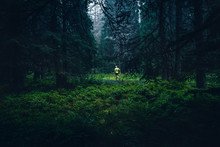 Running In Green Nature. Trail Run In Green Rainy Forest