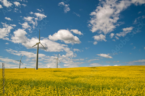 Fotografia  Ecological wind farm on a yellow rape field on a background of blue sky