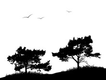 Realistic Silhouette Of Two Pine Trees And Birds Flying In The Sky (vector Illustration).