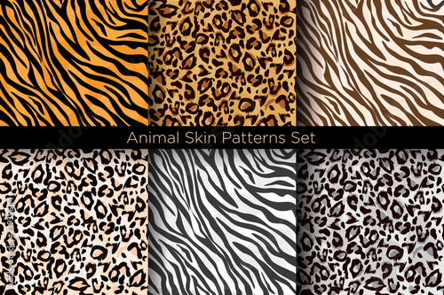 obraz PCV Vector illustration set of animal seamless prints. Tiger and leopard patterns collection in different colors in flat style.