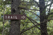 Trail Sign On A Tree