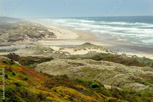 Photo  The colorful coast and dunes near Florence, Oregon, USA