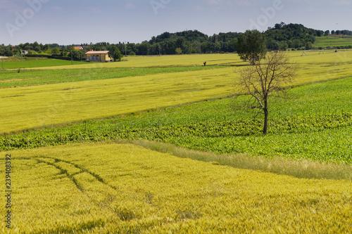 Fotografie, Obraz  Panorami dei Colli Euganei, Veneto