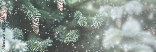 Frosty Pine Cones Hanging From Evergreen Branches With Falling Snow / Christmas Decoration Concept