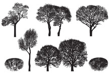 Tree Silhouettes - Black Vector Image Isolated On White Background. Realistic Detailed Graphic Illustration Of Natural Forest Plant With Bare Branches Without Leaves.