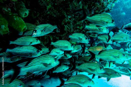 Fototapeten Wald the underwater world of the Caribbean