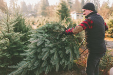 A Man At A Christmas Tree Farm Standing With The Tree He Cut Down.