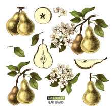 Hand Drawn Set Of Pears