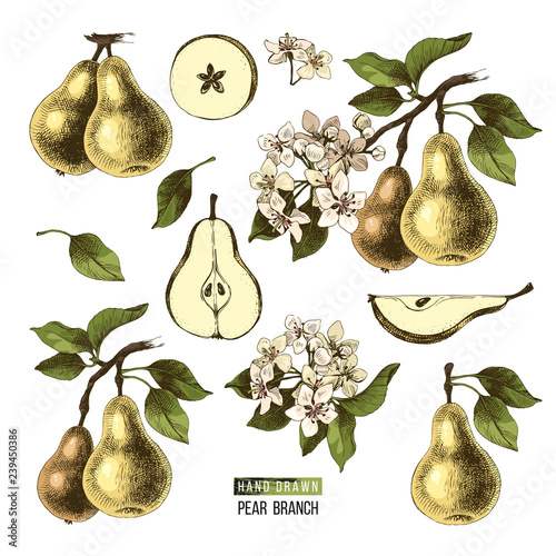 Hand drawn set of pears Tapéta, Fotótapéta