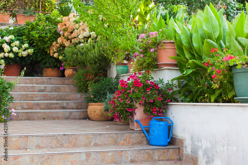 Photo Stands Stairs Diversity of flowers and plants on steps leading to the old house