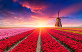 Fototapeta Tulips - The road leading to the Dutch windmills from the canal in Rotterdam. Holland. Netherlands